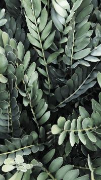 Sage Green Wallpaper 20