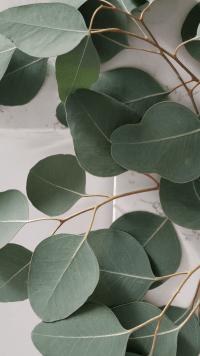 Sage Green Wallpaper 18