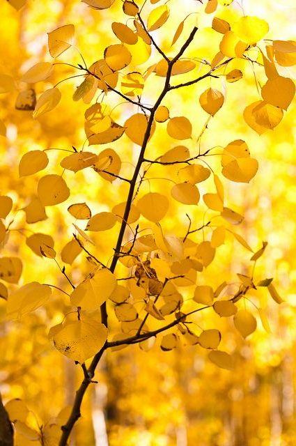 Yellow Aesthetic Wallpaper 1