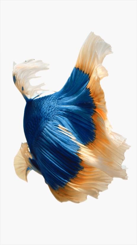 Fish Wallpaper 1