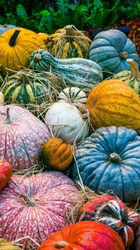 Pumpkin Wallpaper 4