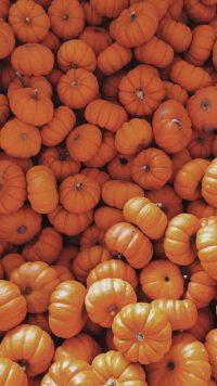 Pumpkin Wallpaper 9