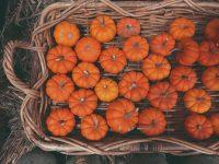 Pumpkin Wallpaper 11