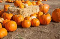 Pumpkin Wallpaper 3