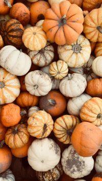 Pumpkin Wallpaper 7