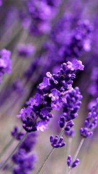 Purple Aesthetic Wallpaper 6