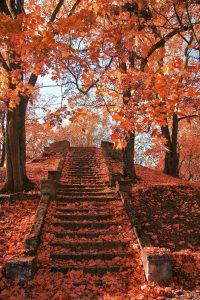 Autumn Wallpaper 12