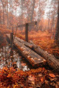 Autumn Wallpaper 3
