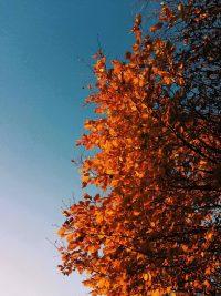 Autumn Wallpaper 49