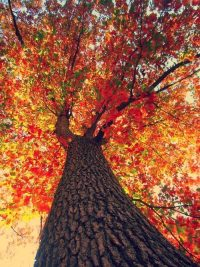 Autumn Wallpaper 13
