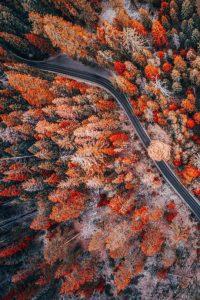 Autumn Wallpaper 11