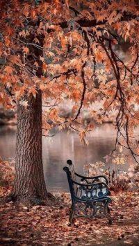 Autumn Wallpaper 4