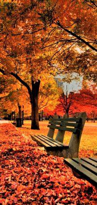 Autumn Wallpaper 16