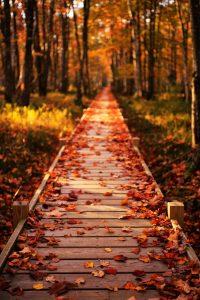 Autumn Wallpaper 15