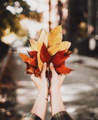 Autumn Wallpaper 14