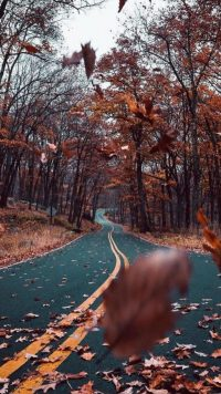 Autumn Wallpaper 24
