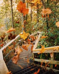 Autumn Wallpaper 23