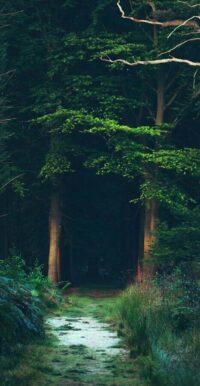 Forest Wallpaper 47