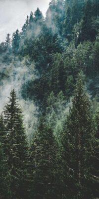 Forest Wallpaper 36