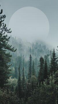 Forest Wallpaper 48