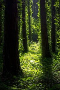Forest Wallpaper 49