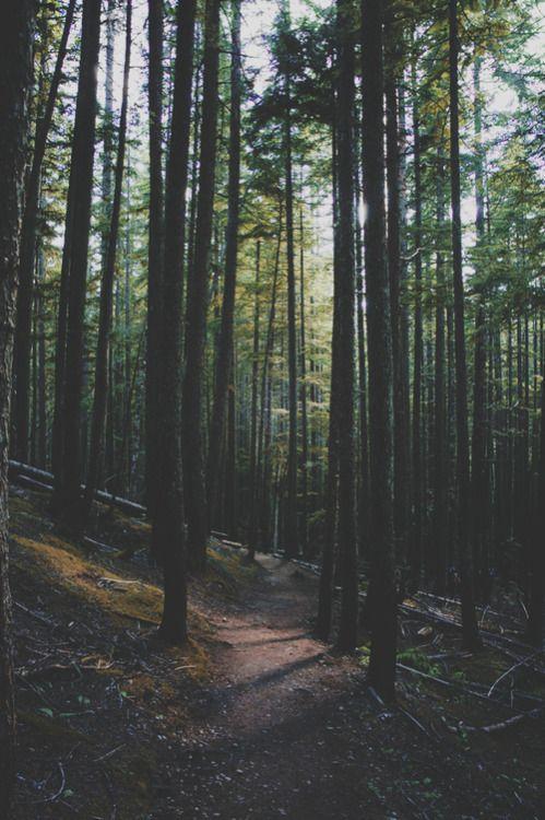 Forest Wallpaper 1