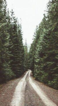 Forest Wallpaper 44