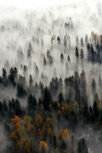 Forest Wallpaper 43