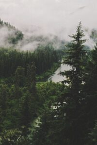 Forest Wallpaper 41