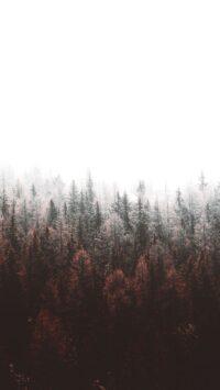 Forest Wallpaper 40