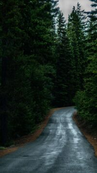 Forest Wallpaper 39