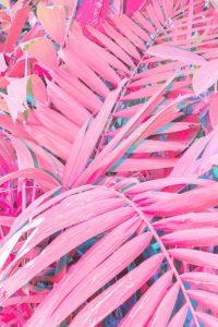 Pink Wallpaper 11