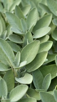 Sage Green Wallpaper 9