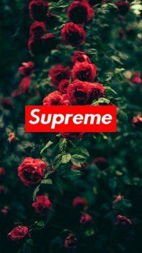 Supreme Wallpaper 21