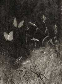 Fairy Grunge Wallpaper 8