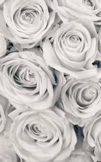 Grey Wallpaper 6