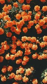 Orange Aesthetic Wallpaper 3